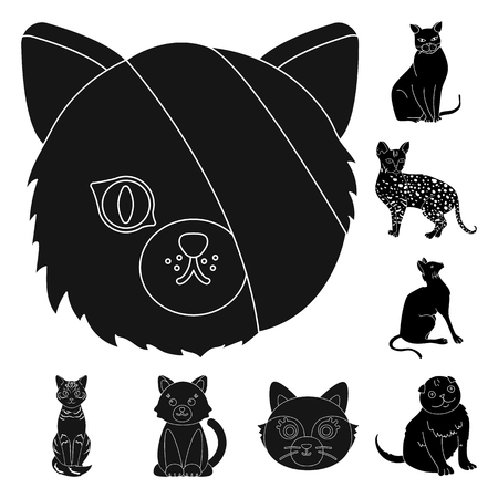 Isolated object of pet and sphynx sign. Set of pet and fun stock vector illustration.