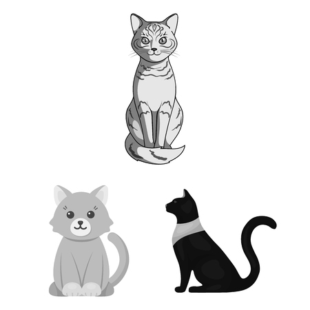 Vector illustration of pet and sphynx icon. Set of pet and fun stock vector illustration.