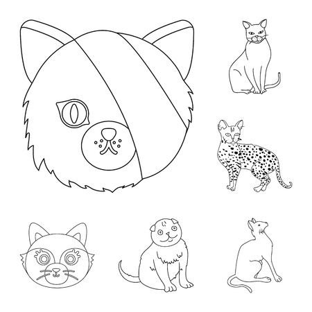 Isolated object of pet and sphynx icon. Set of pet and fun stock vector illustration. Ilustração