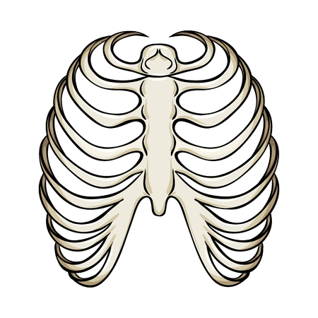Isolated object of bone and skeleton icon. Set of bone and human stock vector illustration.