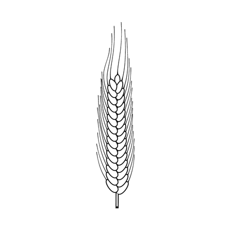 Isolated object of wheat and corn symbol. Collection of wheat and harvest stock vector illustration.