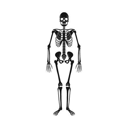 Vector illustration of bone and skeleton logo. Collection of bone and human stock symbol for web. Illustration
