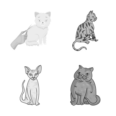 Vector illustration of pet and sphynx sign. Collection of pet and fun stock vector illustration.
