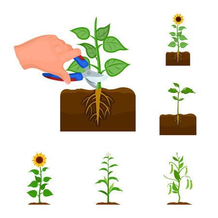 Isolated object of plant and bean sign. Set of plant and process vector icon for stock. Vectores