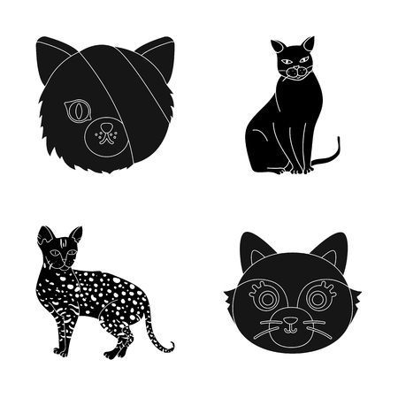 Isolated object of pet and sphynx logo. Collection of pet and fun vector icon for stock.