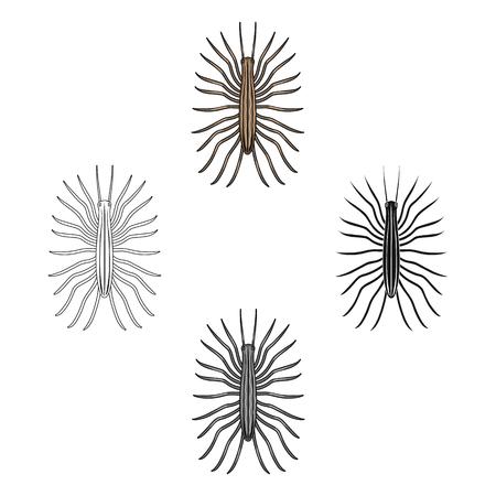 Centipede single icon in cartoon,black,outline,monochrome style for design.Pest Control Service vector symbol stock illustration web.