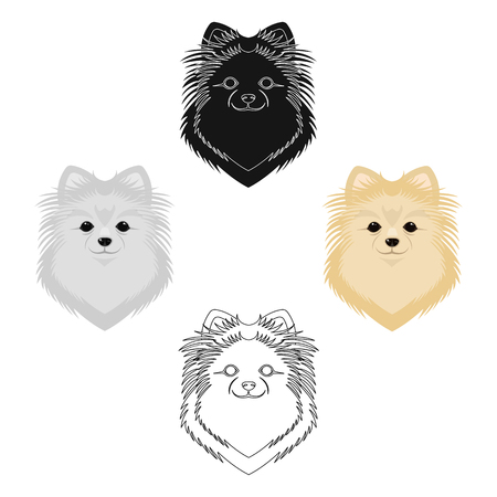Breed of a dog, spitz.Muzzle Spitz single icon in cartoon style vector symbol stock illustration web.