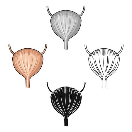 Menschliche Harnblase-Symbol im Cartoon-Stil isoliert auf weißem Hintergrund. Menschliche Organe Symbol-Vektor-Illustration.