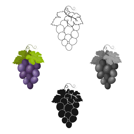 Bunch of wine grapes icon in cartoon style isolated on white background. Spain country symbol stock vector illustration. Stock Illustratie