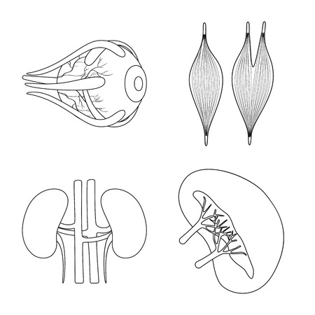 Isolated object of anatomy and organ logo. Collection of anatomy and medical vector icon for stock.