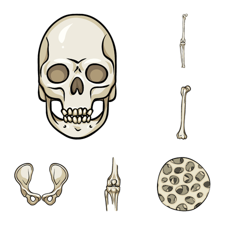 Vector design of bone and skeleton symbol. Collection of bone and human stock symbol for web. Vector Illustratie