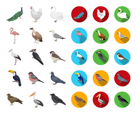 Types of birds cartoon,flat icons in set collection for design. Home and wild bird vector symbol stock web illustration.