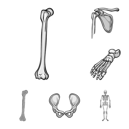 Vector design of biology and medical icon. Set of biology and skeleton vector icon for stock.