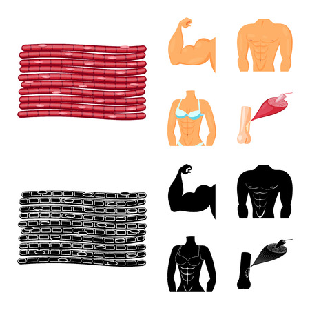 Vector illustration of fiber and muscular logo. Collection of fiber and body  stock symbol for web.