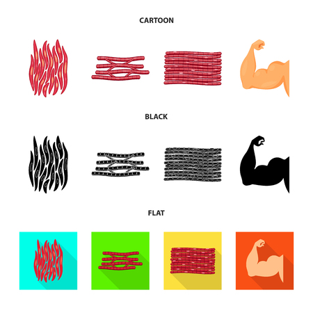 Isolated object of fiber and muscular icon. Collection of fiber and body stock vector illustration. Vector Illustration