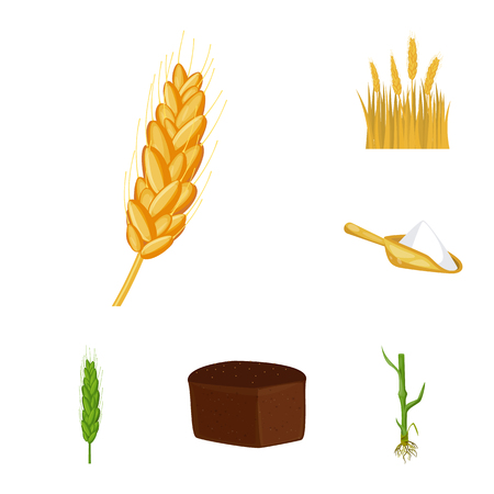 Vector design of wheat and corn sign. Collection of wheat and harvest stock symbol for web.