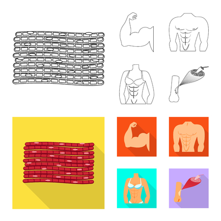 Vector illustration of fiber and muscular sign. Collection of fiber and body  stock vector illustration. Illustration