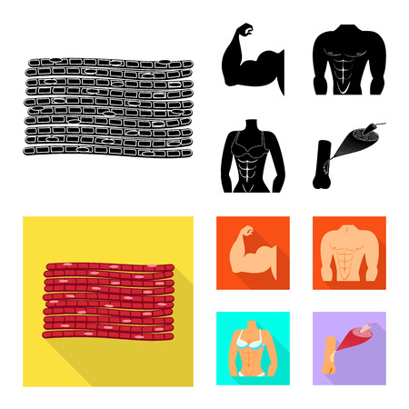 Vector design of fiber and muscular sign. Collection of fiber and body  vector icon for stock. 일러스트