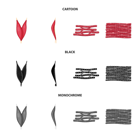 Vector illustration of fiber and muscular sign. Set of fiber and body stock symbol for web.