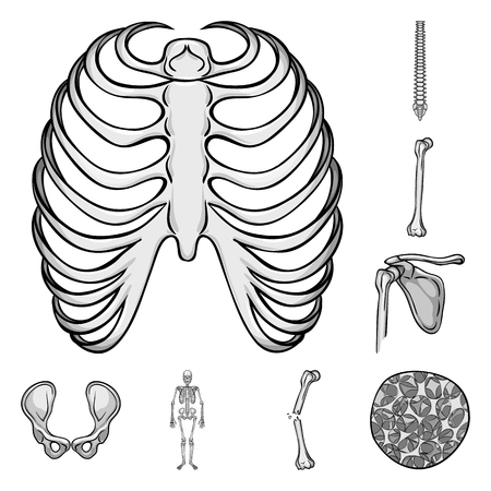 Isolated object of biology and medical symbol. Set of biology and skeleton vector icon for stock. Illustration