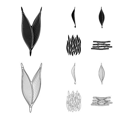 Vector illustration of fiber and muscular symbol. Set of fiber and body  stock vector illustration.