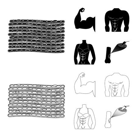 Vector illustration of fiber and muscular logo. Collection of fiber and body  vector icon for stock. Illustration
