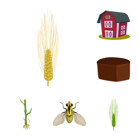 Vector illustration of wheat and corn symbol. Collection of wheat and harvest stock vector illustration. Иллюстрация