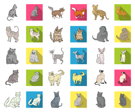 Breeds of cats cartoon,flat icons in set collection for design. Pet cat vector symbol stock web illustration.