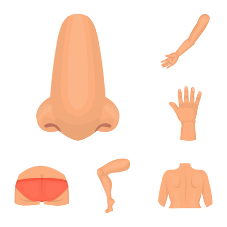 Isolated object of body and part icon. Collection of body and anatomy vector icon for stock. Ilustração