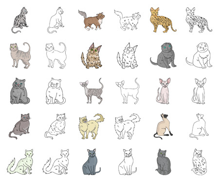 Rassen von Katzenkarikaturen, Umrisssymbole in der Setsammlung für Design. Haustierkatzenvektorsymbolvorrat-Netzillustration.