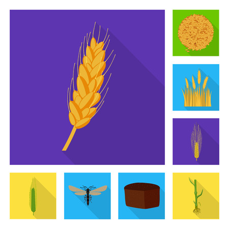 Vector design of wheat and corn logo. Collection of wheat and harvest stock vector illustration.
