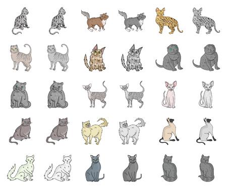 Rassen von Katzenkarikaturen, monochrome Symbole in der Setsammlung für Design Haustierkatzenvektorsymbolvorrat-Netzillustration.