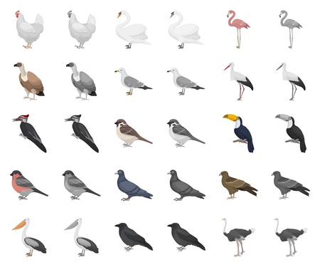Types of birds cartoon,monochrom icons in set collection for design. Home and wild bird vector symbol stock web illustration. Illustration