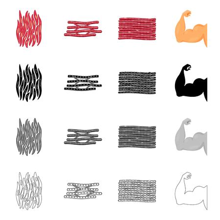Vector design of fiber and muscular symbol. Set of fiber and body  stock symbol for web.