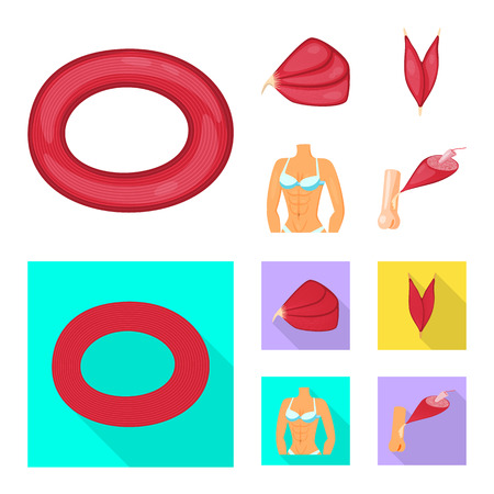 Isolated object of fiber and muscular symbol. Collection of fiber and body  vector icon for stock. Illustration