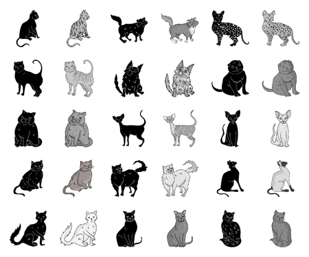 Breeds of cats black,monochrome icons in set collection for design. Pet cat vector symbol stock web illustration.