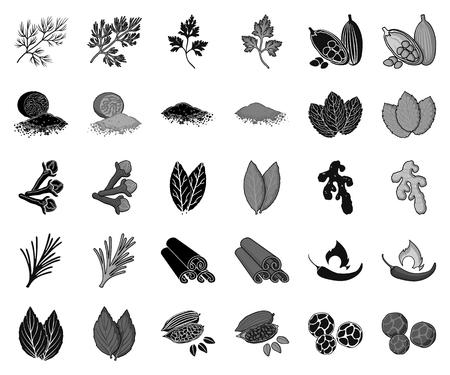 Icone nere e monocromatiche di erbe e spezie in insieme di set per il disegno. Diversi tipi di condimenti simbolo d'archivio web di vettore. Vettoriali