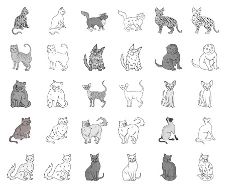 Breeds of cats monochrome,outline icons in set collection for design. Pet cat vector symbol stock web illustration.