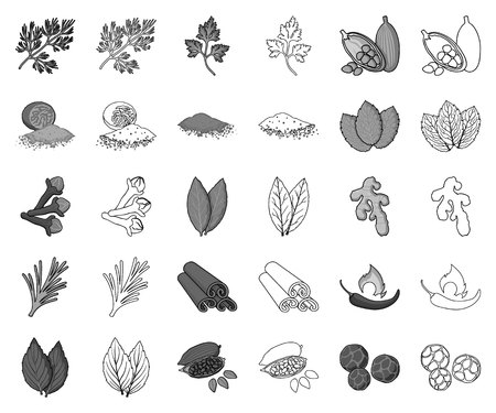 Herb and spices monochrome,outline icons in set collection for design.Different kinds of seasonings vector symbol stock web illustration.