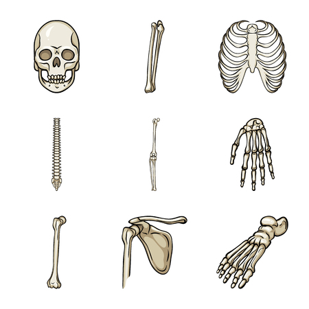 Isolated object of bone and skeleton logo. Collection of bone and human stock vector illustration. Illustration