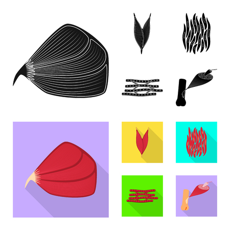 Isolated object of fiber and muscular icon. Collection of fiber and body  stock symbol for web.
