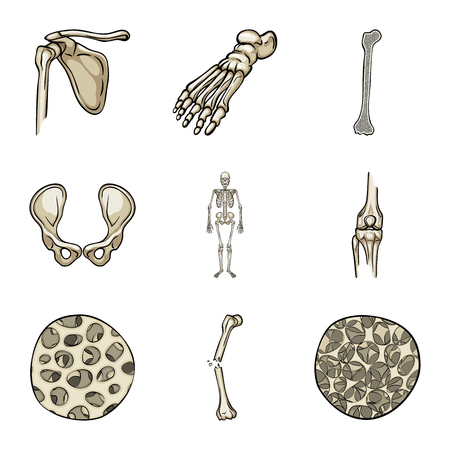 Isolated object of bone and skeleton sign. Set of bone and human stock vector illustration.