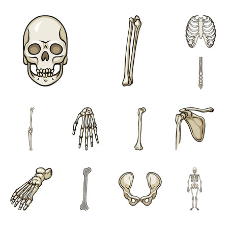 Isolated object of bone and skeleton symbol. Collection of bone and human stock vector illustration.