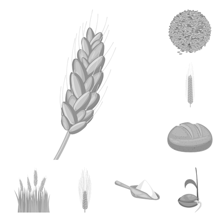Vector illustration of rye and plant. Set of rye and corn stock vector illustration.