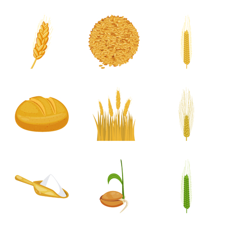 Vector illustration of wheat and corn icon. Set of wheat and harvest stock symbol for web.