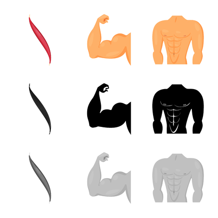 Isolated object of fiber and muscular logo. Set of fiber and body  stock symbol for web. Illustration