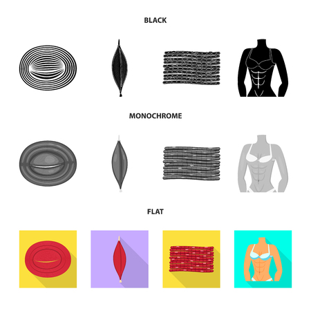 Vector design of fiber and muscular icon. Set of fiber and body  vector icon for stock.