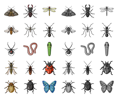 Different kinds of insects cartoon,mono icons in set collection for design. Insect arthropod vector symbol stock web illustration. Banque d'images - 119009250