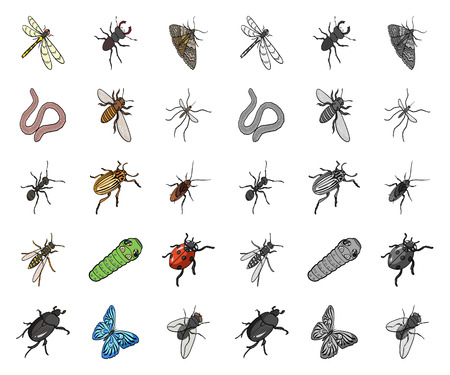 Different kinds of insects cartoon,mono icons in set collection for design. Insect arthropod vector isometric symbol stock web illustration.