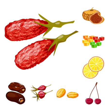 Vector illustration of fruit and dried symbol. Collection of fruit and food stock vector illustration.